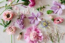 Flowers / Inspiring images of beautiful flowers