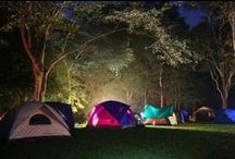 Backyard Campout Party / by Amber Brezovic