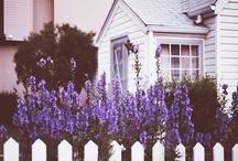 Flowers / by Bronwyn Cole