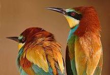 Birds / by Charlotte Blackburn