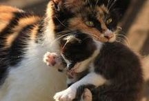 Cats and Kittens / The feline beauty