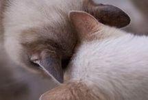 I Love Kittehs! / by LinSeen Lee