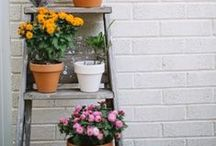 For the home: Garden & Flowers & Outdoor Inspirations