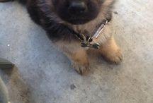 Fluffas / Cute fluffy pups