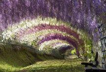 Garden & Flower Love