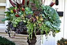 Oh my urns! / Arrangements in plant urns