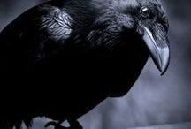 Raven & Crows / Raven & Crows  Photos Art and more ^^