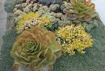 ...succulent. .. / by flossie hill
