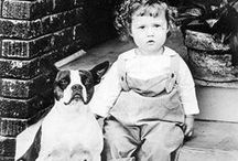 Vintage Boston Terriers / Boston Terriers