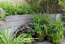 Garden / My dirt and inspiration / by Jennifer Allen