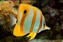 Aquariums & Fish / by Adam Lang