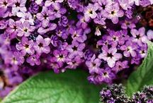 Gardening / by Niki Heffington Elmore
