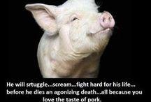 Oikeutta eläimille/ Animal rights