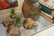 Jardinagem-Regiane Ivanski / ideias de plantas e jardinagem// palavras-chave: faça você mesma, DIY, inspiração, jardinagem em recipientes, decoração, plantas, cuidar de plantas e jardim pequenos espaços.