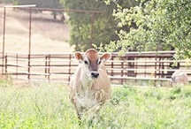 Country Bliss Notebook