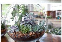 Garden & Plants / by Kerry Dunn