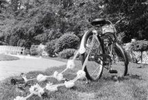 Bicycle wedding theme  / Wedding bicycle ideas