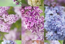 PLANT! / by Gaynor Witchard Garden & Jewellery Designer