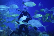 Dive into The Palm Beaches / When it comes to scuba diving or snorkeling, which is your preference? Diving coral reefs or snorkeling the shallows just off shore? Exploring wrecks teeming with fish rarely seen by the average diver or skimming through crystal waters? Whatever your preference or pleasure, here in The Palm Beaches we satisfy your passion.  http://ow.ly/fA20u / by The Palm Beaches Florida