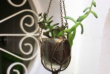 Plantas penduradas - Regiane Ivanski