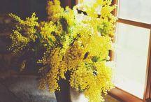 Grow / by sea tree bee