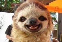 SLOTHS! / My spirit animal.
