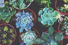 succulent&cacti
