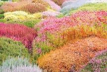 Chakra Rainbow / by Smadar Lorie