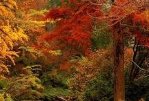 Fall / All things Fall