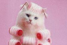 Pet Humor (cats) / by Kara *