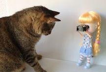 ❤️ Cats-Chat-кошки-Gatti-Совушки+Котёнок =^.^= ❤️ / The smallest feline is a masterpiece ~ Leonardo Da Vinci ~   Visit also : https://www.pinterest.com/HBlackthorne/