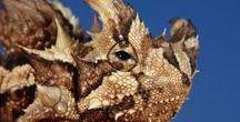 Amphibians & Reptiles