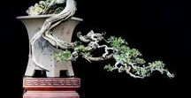 Bonsai Art Creations