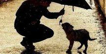 Dogs-Chiens-Hunde-Hundar-Perros-Psy-Собаки-犬