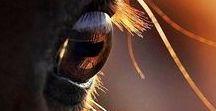 Wild Horses-Chevaux sauvages-Vilda hästar-Wilde paarden-Caballos salvajes-野生の馬 - Дикие лошади -