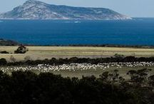 The Australian Outback / Where your beautiful wool comes from