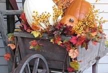 Fall  / by Tammy Paulson