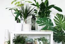 Plant Life / by ⥤◈⥢ Asiatic Nubian ⥤◈⥢