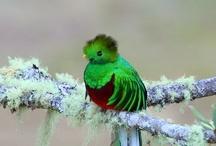 Pretty Birds!!! / by Betsy Killmeyer