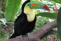 Costa Rica / by Sra. Burdette