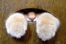 Cats & Animals - Paws - Noses -  Eyes / by Linda Royal