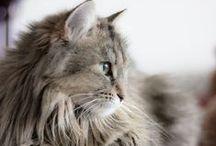 Cute & Furry / by Diane Epp Fillenworth