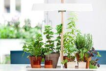 Aus dem Garten / Egal, ob Du einen Garten, Balkon oder Fensterbrett hast: Du kannst Deine eigenen Pflanzen, Obst und Gemüse quasi überall anpflanzen! Kochzauber zeigt Dir, wie Du Deinen eigenen Garten und die dazu passenden Gerichte zauberst.
