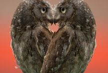 I love owls / by Claire Twaddle