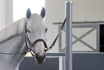 Horse Barn Accessories / Classic Equine Equipment offers a variety of accessories to customize and detail your barn. The components are superior quality and complement all of the stall systems produced by Classic Equine.