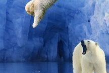 Arctic and Antarctic / by Claire Twaddle
