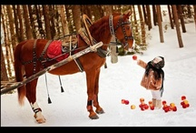Holiday Decor-Barn Style / Our Holiday decor board will have you and your horses ready for the holidays. Horses love decor too, hopefully we can inspire you!