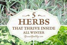 Herbs / by Yoreganics