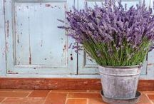 Fun Projects & Recipes Using Lavender / Uses for Lavender Phenomenal in the garden and home