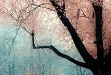Wonder of seasons